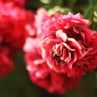 у меня есть цветок. :: Алёна Дягелева