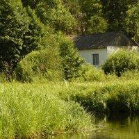 Домик в лесу :: Вадим Шинкарь