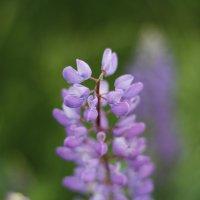 Цветы :: esadesign Егерев