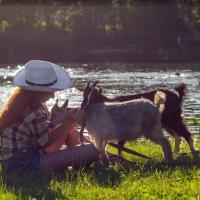 ...эти добрые существа... :: Ksjy Kotovenko