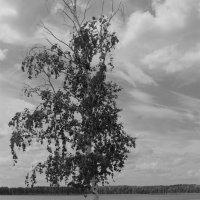 одиночество :: Есения Censored