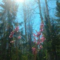 весна :: дарья новоселова