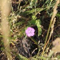 Цветок :: Альбина Ставрогина