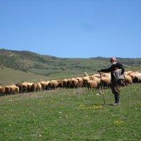 Пастух, Иран :: Irina Nil