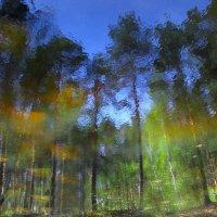 Шершавый ветер :: Sergey Sergeev