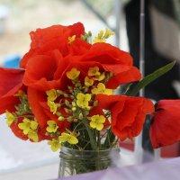 степные-луговые :: васек задунайский