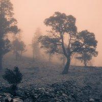 Вариации с туманом... :: Sergey Sergeev