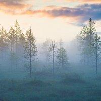 Туман :: Владимир Зайцев