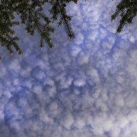 Небо :: Елена Васильева