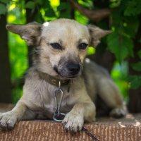 Осторожно, злая собака!!!))) :: Геннадий Калюжный