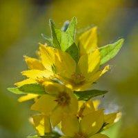 цветы :: Татьяна Панчешная