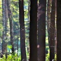В лесу :: Алексей Попов