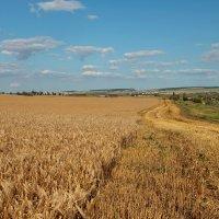 Пшеничный пейзаж :: Марина Дегтярева