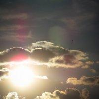 sun :: Евгений Погодин