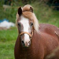 лошадка :: Schumacher Peter