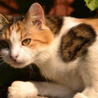 Кошечка :: Алла Арестова