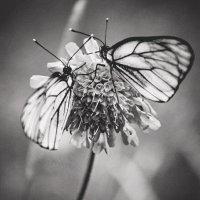 Бабочки :: Nadin Solovieva