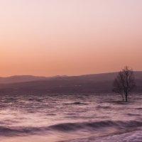 Розовый закат :: susanna vasershtein