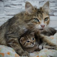 Что мне снег, что мне зной, когда моя мама со мной) :: Лилия Мокретченко