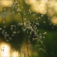 Шёпот нежной травы..... :: Елена Kазак