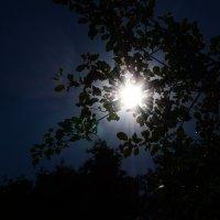 солнышко сквозь листву :: Афродита Фотолюбитель