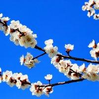 Весна !!! :: Роман Божков