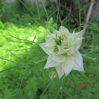 Цветы Черногории :: Наталья