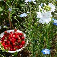 Клубника среди цветов :: Ирина Татьяничева