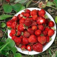Урожай :: Ирина Татьяничева