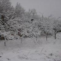 Сливовый сад :: Дмитрий Никифоров