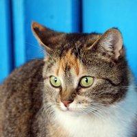 Кошка :: Юлия Харина