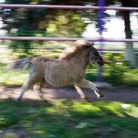 Пони :: Oleg Khot