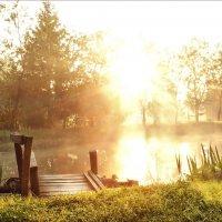 Про утро, прудик и туман... :: Елена Kазак