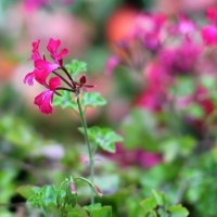 Цветок :: Alex Kamensky