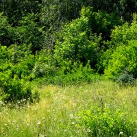 Трава,кусты :: Александр Садовский