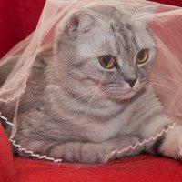 Кошка под фатой :: Юлия Уткина