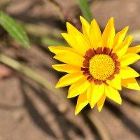 Солнечный цветок :: Алла Арестова