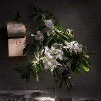 О яблоне... :: Svetlana Sneg