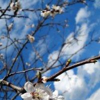 Весна :: Danka Danilova
