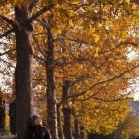 Осень :: Ольга Шестакова