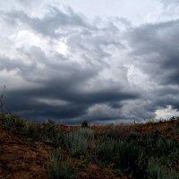 Перед дождём :: Danka Danilova