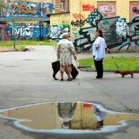 дамы с собачками :: Наталия Уварова