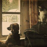 Милка с Мулькой  у окна. :: Елена Kазак