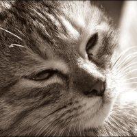 кошка :: Олеся Долженко