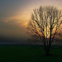Одинокое дерево :: Роман Божков