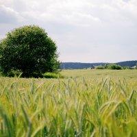 поле :: Даниил Глинский