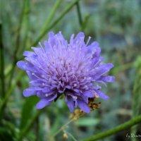 Полевые цветы :: Дмитрий Тарарин