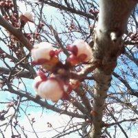 весна :: Svetlana Chistova