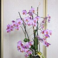 Орхидея.. :: Александр Манько