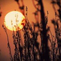 Солнце :: Екатерина Аматова